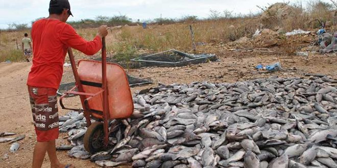 Causas do incidente ainda estão sendo investigadas (Foto: upanema.net)