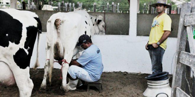 Dos produtores beneficiados pela compra do leite, 87,1% são da agricultura familiar (Foto: Emater)
