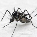 Especialistas discutem usar radiação para combater Aedes aegypti