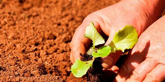 Agricultores de 65 municípios foram beneficiados